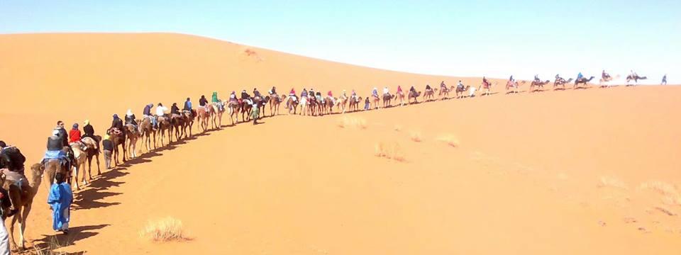 camel tour sahara desert