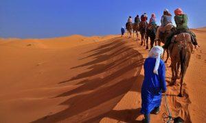 camel tour desert