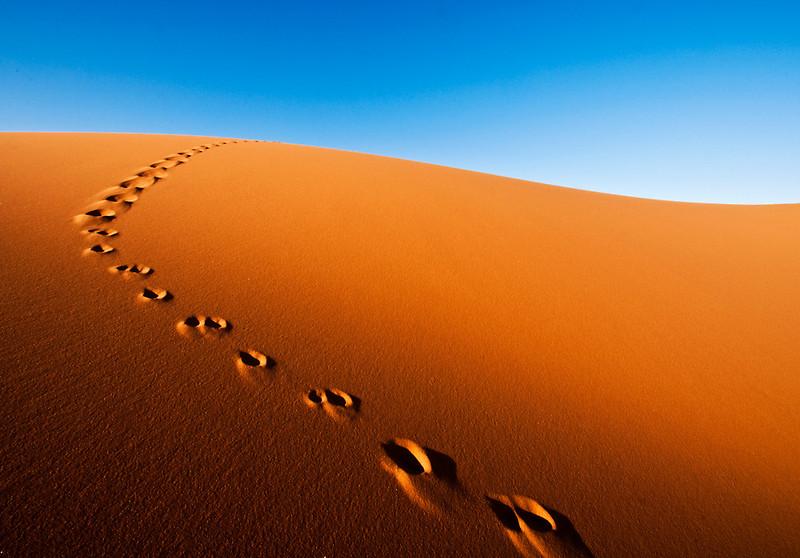 sahara desert fox
